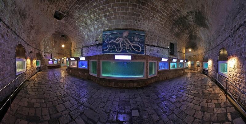 Аквариум Дубровника Океанариум в старом городе