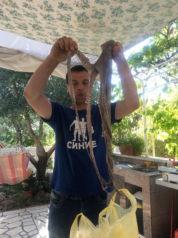 осьминоги в белом вине в хорватии