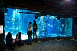 Достопримечательности ровиня аквариум